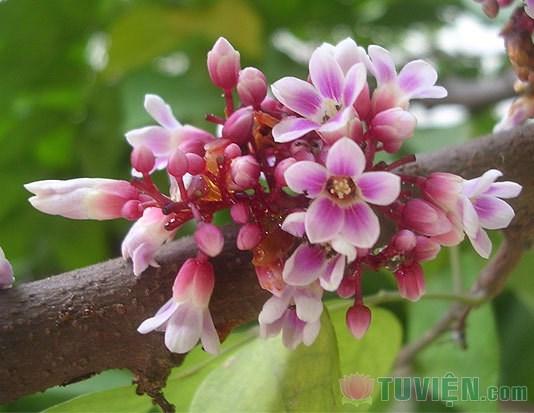 Những loài hoa chữa bệnh, Sức khỏe, Hoa chua benh, bai thuoc tu hoa, tac dung chua benh cua hoa, hoa, hoa cuc, hoa hong, tinh dau hoa hong, hoa dai, hoa khe, hoa atiso, hoa gao