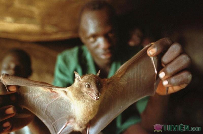 Guinea-Bats-Ebola.jpg
