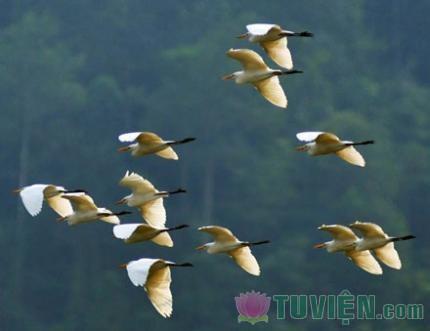 Bài học quý giá từ loài chim