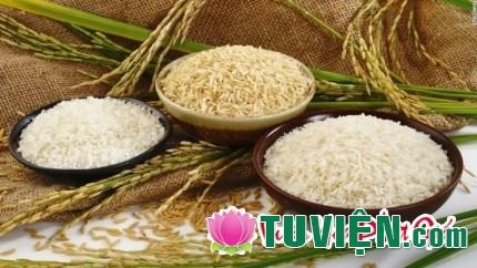 Cơm gạo là phúc căn mà chúng ta cần phải biết giữ gìn