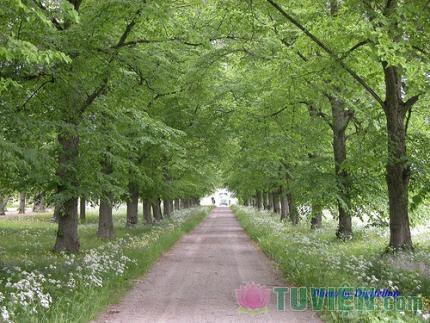 Con đường dẫn đến hạnh phúc