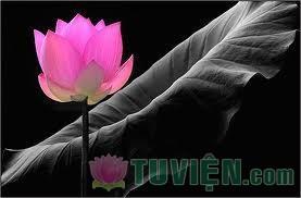 Giáo lý Vô Ngã của Phật giáo và vấn đề Siêu Ngã