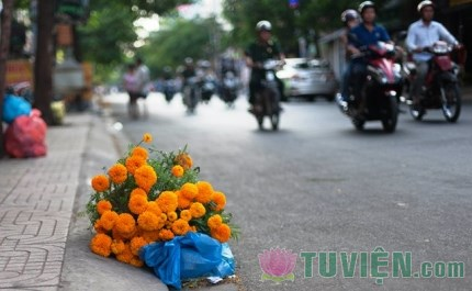 Hoa và rác - mỗi thứ đều có vẻ đẹp riêng