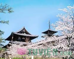 Lịch sử thiền tông Nhật Bản - Chương 4