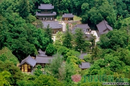 Lịch sử thiền tông Nhật Bản - Chương 5