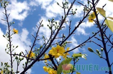Mùa Xuân sắp đi qua nhưng ý Xuân luôn ở lại
