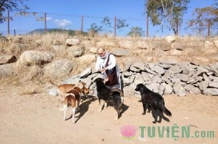 Năm con chó, xin được nói chuyện về loài chó