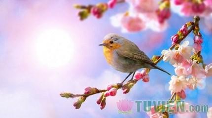 Phật dạy cách sống một đời như bốn mùa đầy màu sắc