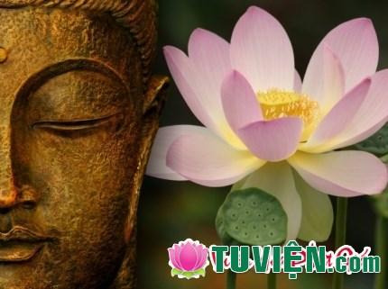 Phật như hoa sen, sinh ra từ bùn nhưng không dính mắc bùn nhơ
