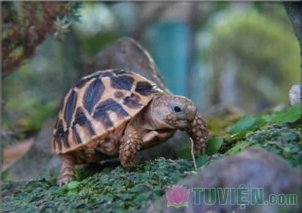 Lỗ cây và con rùa mù