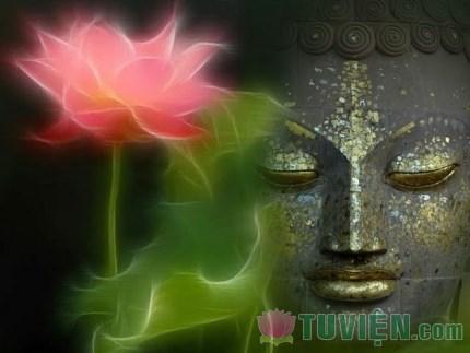 Tâm Phật được ví như Hoa sen