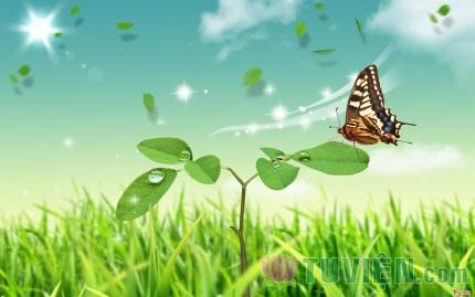 Tấm Lòng Rộng Mở - Luyện tập lòng từ bi trong đời sống hằng ngày - Phần 17: Chương 15: Phát sinh trạng thái Bồ Tát