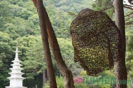 Hàn Quốc: Triển lãm nghệ thuật đương đại và Phật giáo