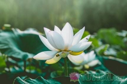 Vì sao hoa sen sinh sôi chốn bùn lầy ô trọc?