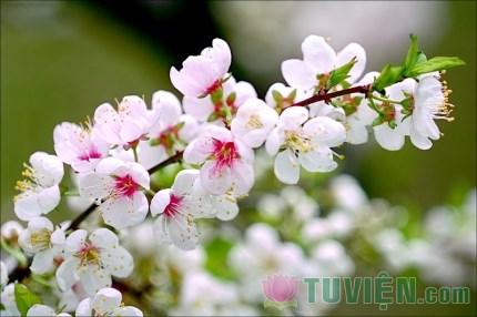 Xuân trong nét đẹp người tu